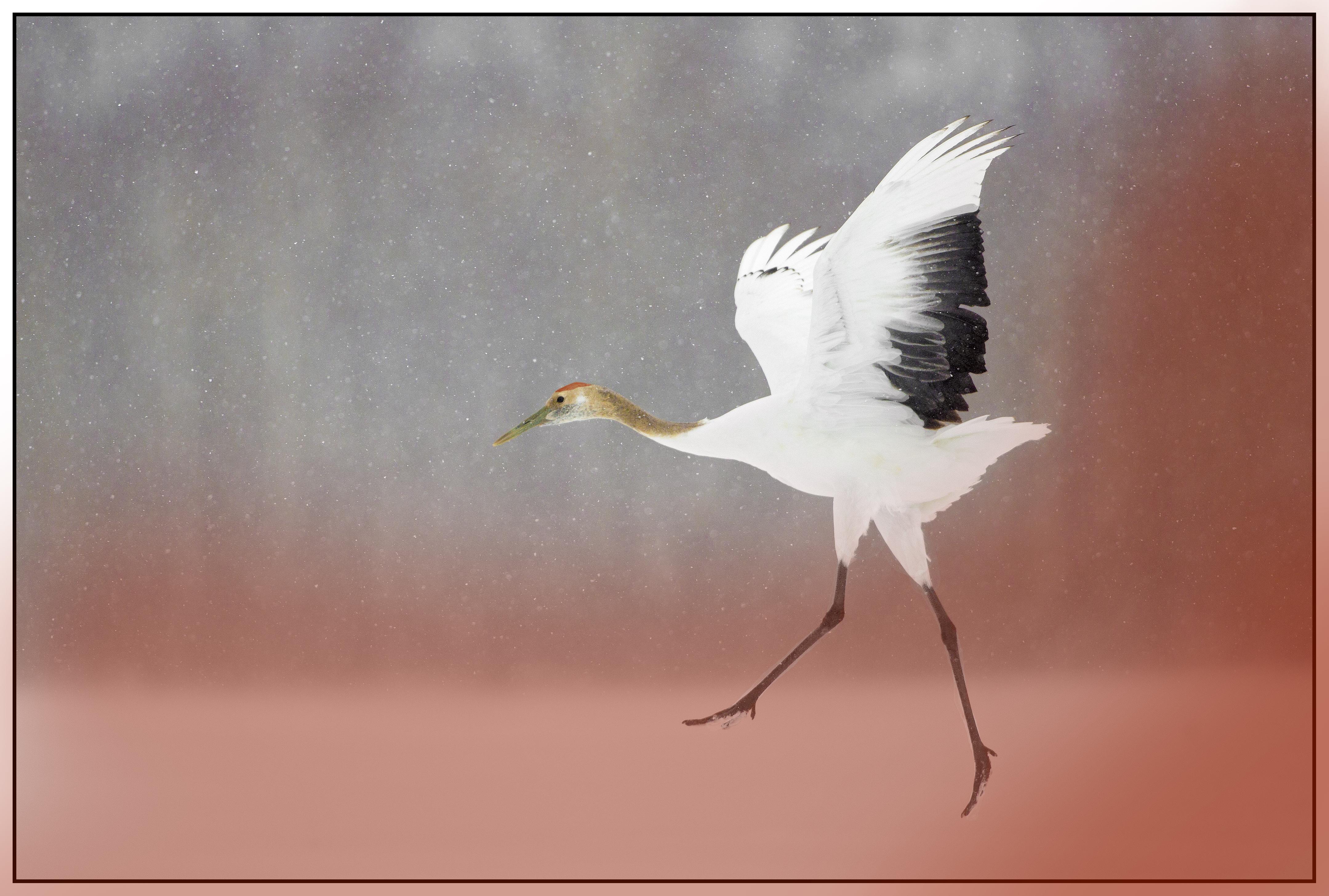 image of a crane