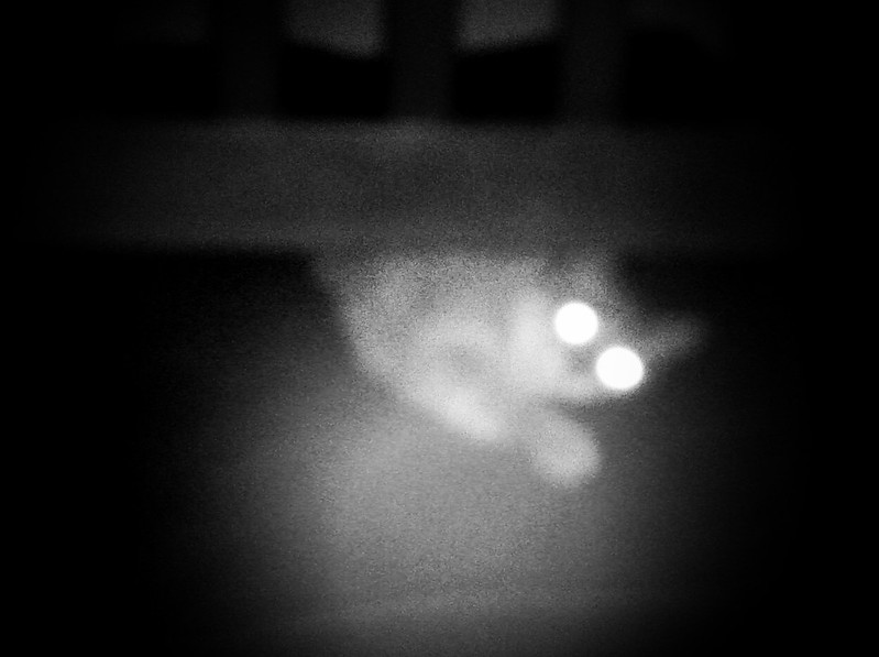 Photo of a cat hiding, eyes glowing.