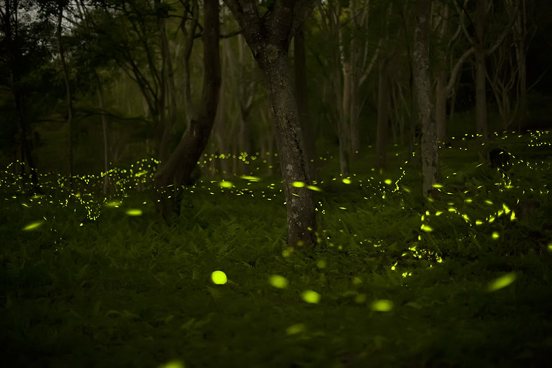 Image of fireflies in the grasses and trees.