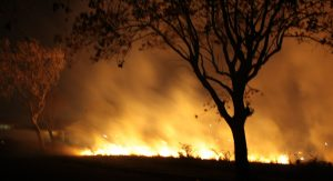 Photo of a house and meadow on fire with the silhouette of a tree in front.