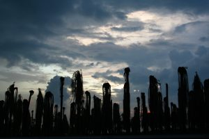 A line of backlit palm trees, without fronds.