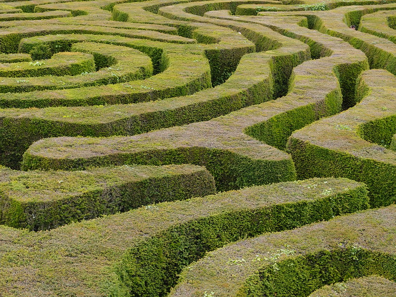 Image of a maze of hedges.