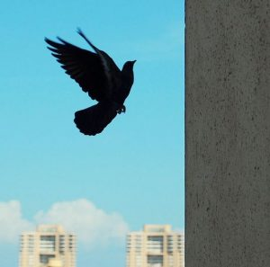 silhouette of a pigeon flying into a concrete wall.
