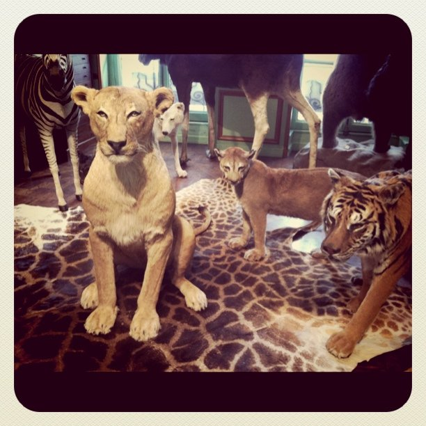 Photo from a French taxidermy shop.