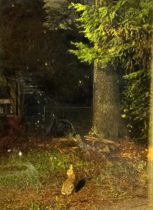 Photograph of a rabbit and a tree at night.