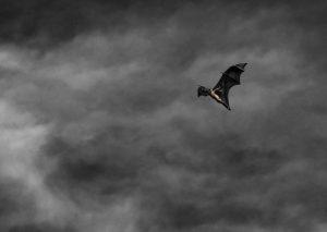 An image of a bat flying at night.